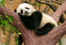 How to get out of a Google Panda penalty